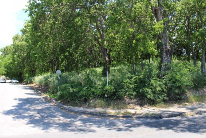 Chelwood, Lot 1